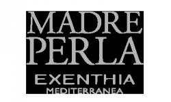 Madreperla Exenthia Mediterranea