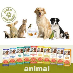 Universe Pets - Animal Essence
